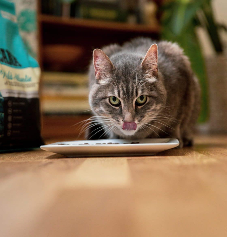 ACANA Cat 2